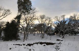 Trail Ficuzza: nel bosco innevato, la passerella del Trail Siciliano